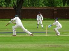 cricket-playing